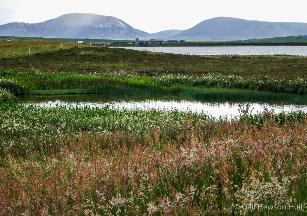 Nature reserve on West Mainland, Orkney.