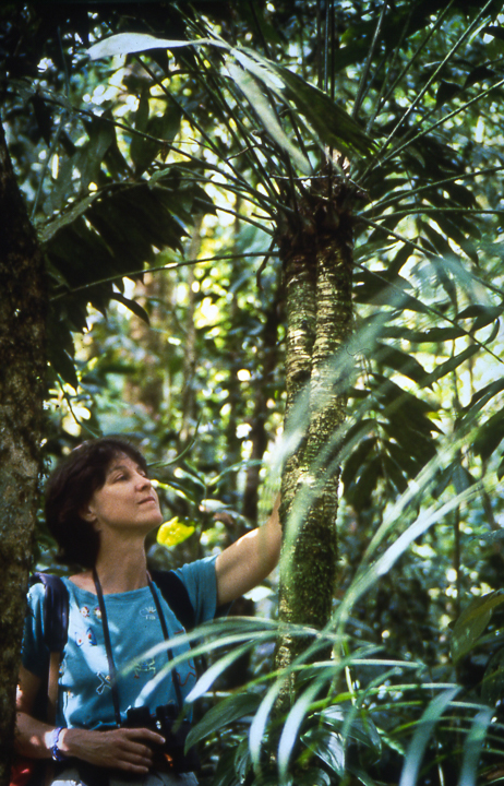 Yours truly in 1990 with the tallest Zamia fairchildiana plant I ever found in the primary forest of Las Cruces . Photo: L.D. Gomez