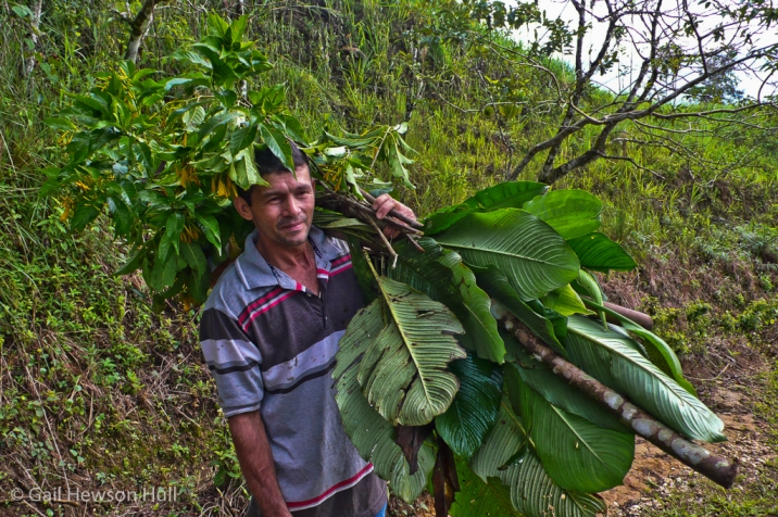 Field worker, San Vito, Costa Rica, 2008