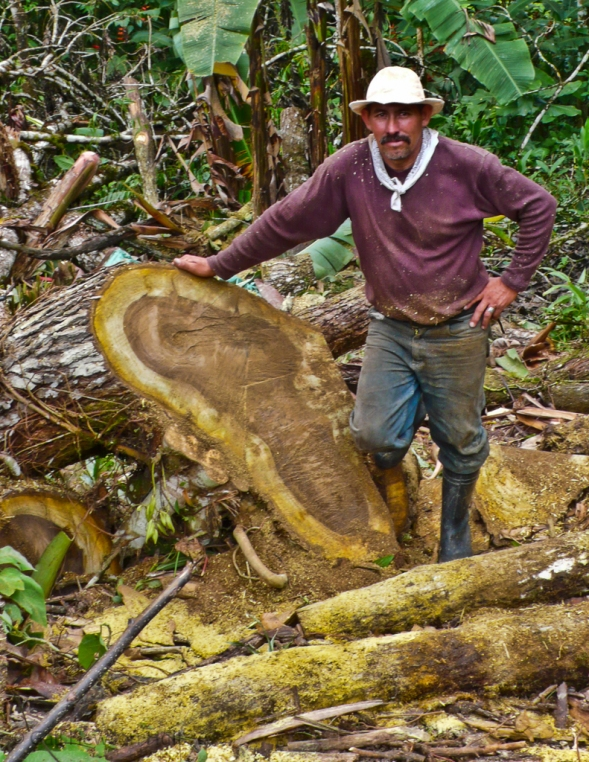 Tree cutter, San Vito, Costa Rica