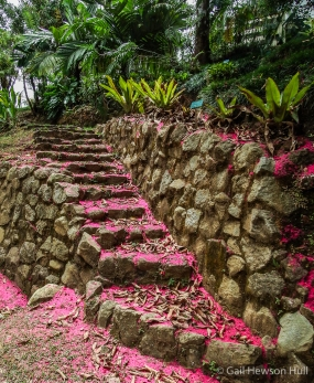 Stone steps within Wilson Garden covered with flowers from manzana de agua tree