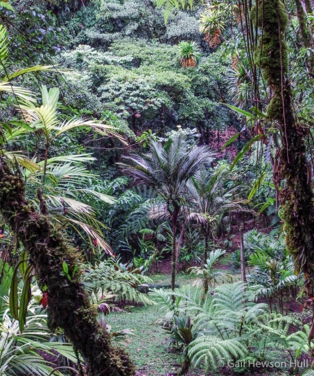 Though palms are everywhere in WBG, this view is on a trail dedicated to diverse palm species.