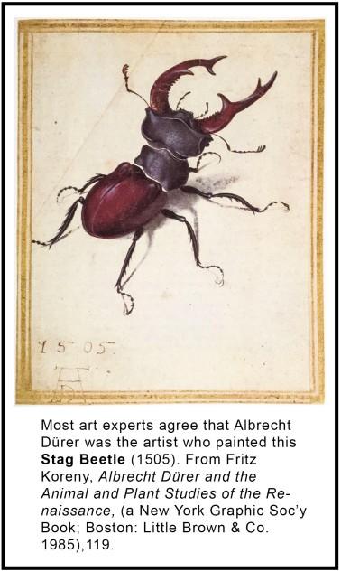stag-beetle-albrecht-durer-fd2